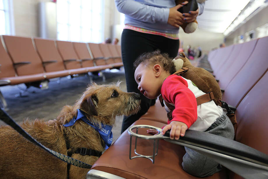 "Fourteen-month-old Jose Anthony Cye catches the attention of ""Whiskers,"" a mixed-breed dog, at Terminal A of the San Antonio International Airport, Monday, Oct. 14, 2013. The newly implemented program aims to de-stress passengers according to their press release. The dog is part of the airportÕs Pups and Planes program implemented on Monday. The first of its kind in Texas program aims to de-stress passengers. Currently, five dogs are in the program with plans to add more in the future. Cye and his mother were on their way to Detroit. Photo: JERRY LARA, San Antonio Express-News / © 2013 San Antonio Express-News"