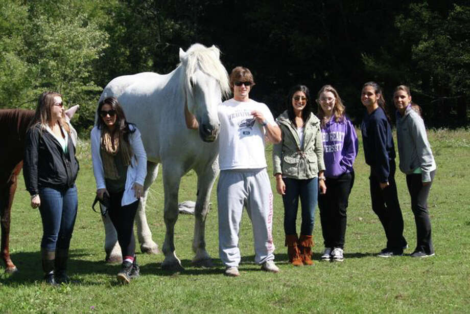 Jason Torey and his Sacred Heart University classmates recently visited the Humane Organization Represent Suffering Equines of Connecticut Inc. Photo: Contributed Photo, Contributed / Darien News
