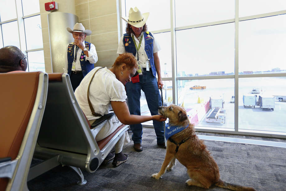 "Back in February 2014, the U.S. Department of Transportation released its monthly ""Air Travel Consumer Report."" That document detailed the number of pet deaths among several American carriers and the specific reports from each of them from January to December 2013.Source: Air Travel Consumer Report Photo: JERRY LARA, San Antonio Express-News / © 2013 San Antonio Express-News"