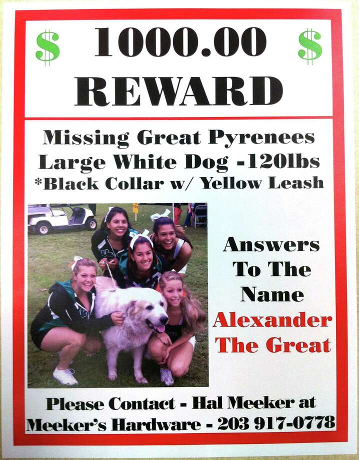 The owner of Alex, the 120 lb. Great Pyrenees dog who went missing from behind Meeker's Hardware Store on Sept. 29, is now offering a $1,000 reward. Photo: Contributed Photo / The News-Times Contributed