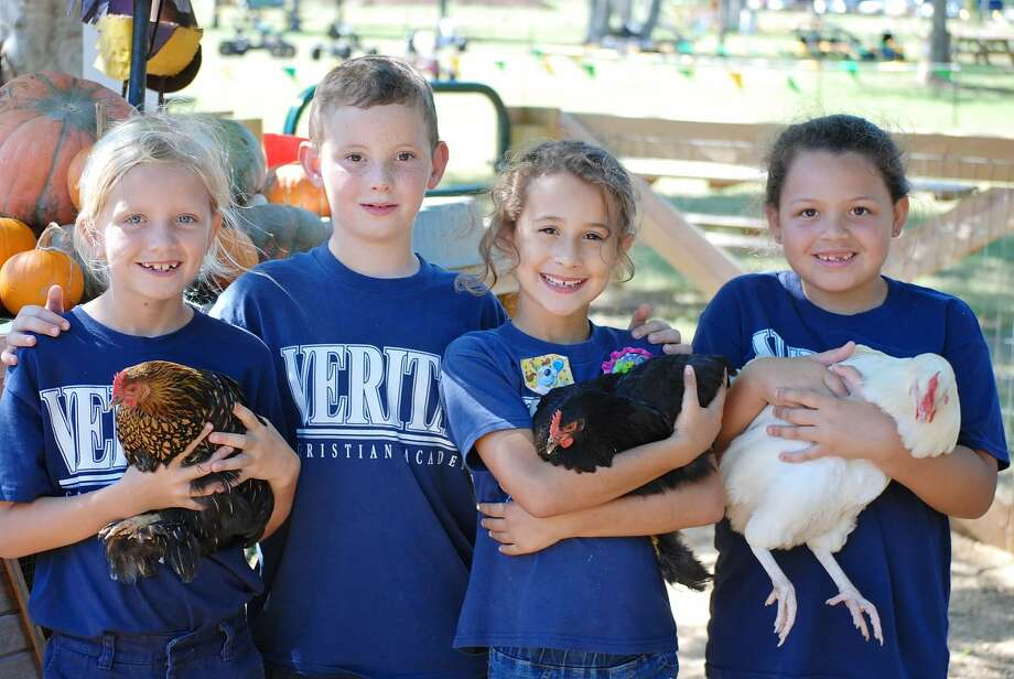 Students from Veritas Christian Academy meet chickens at Blessington Farms. Photo: Provided By Veritas Christian Academy.
