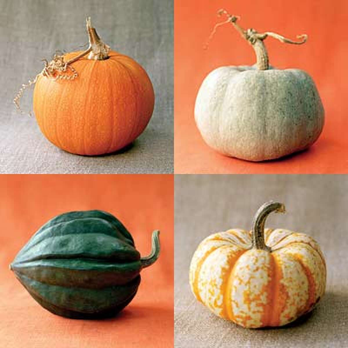 A pumpkin can come in many different colors, and is actually a fruit, not a vegetable. Source: Yahoo.com.