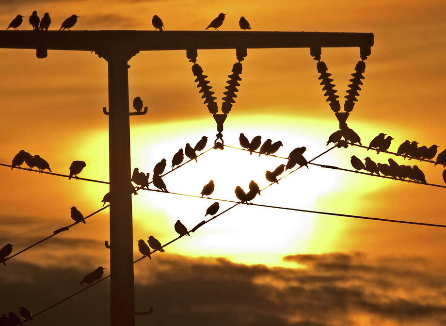 Birds sit on power lines during sunset, near Straussfurt, central Germany, Monday, Oct. 14, 2013. Photo: Jens Meyer, ASSOCIATED PRESS / AP2013
