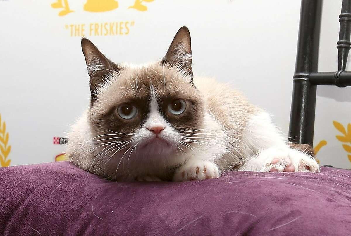 Big whoop: Winning Friskies' Lifetime Achievement Award in New York has not improved Grumpy Cat's disposition.