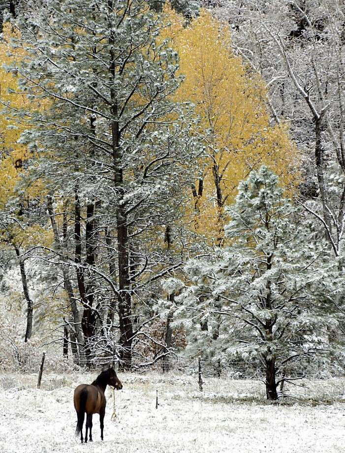 If it weren't for the aspens,one might think it's already winter in Cowles, N.M. Photo: Clyde Mueller, Associated Press