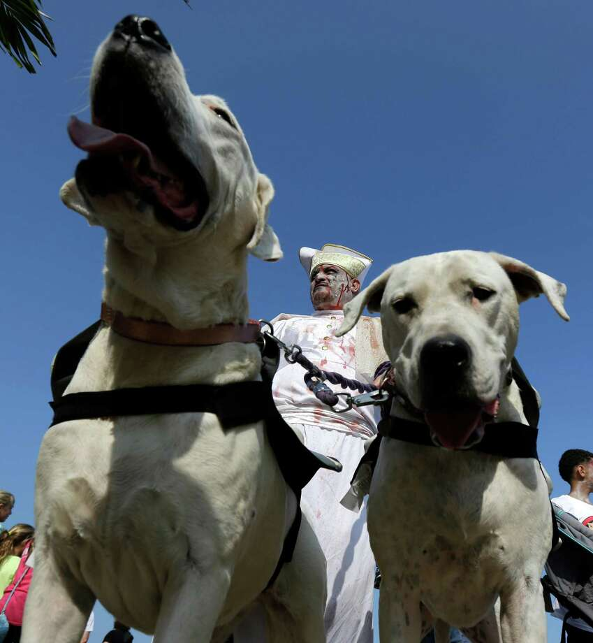 Paul Kurtz, of Brick, N.J., center, walks with his dogo argentino dogs Xoey, left, and Nelly during a zombie walk at the Asbury Park boardwalk, Saturday, Oct. 5, 2013, in Asbury Park, N.J. According to Guinness World Record adjudicator Michael Empric, the 9,592 zombies gathered sets a new record for largest zombie walk. (AP Photo/Julio Cortez) Photo: Julio Cortez, Associated Press / AP