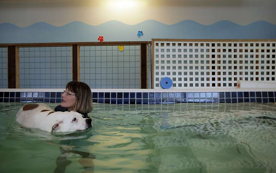 Louisa Craviotto, owner of the Swimming Dog in Petaluma, helps client Biscuit work out in the indoor pool. Photo: Carlos Avila Gonzalez, The Chronicle