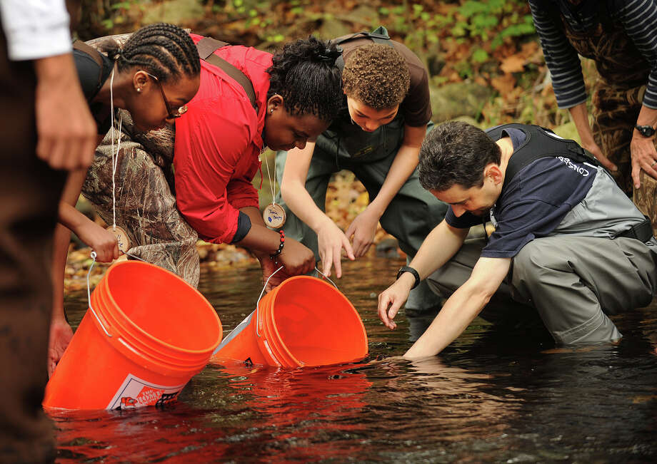 From left; Bridge Academy students Tiore Phillips, 12, Tamia Bagley, 13, and Andre Wilson, 13, all of Bridgeport, release Brook Trout into the Pequonnock River with the help of Beardsley Zoo educator Gian Morresi at Beardsley Park in Bridgeport, Conn. on Thursday, October 17, 2013. The school, along with fellow charter school Park City Prep, spent the last year raising the trout as part of a conservation and education program called 'Trout in the Classroom'. Photo: Brian A. Pounds / Connecticut Post