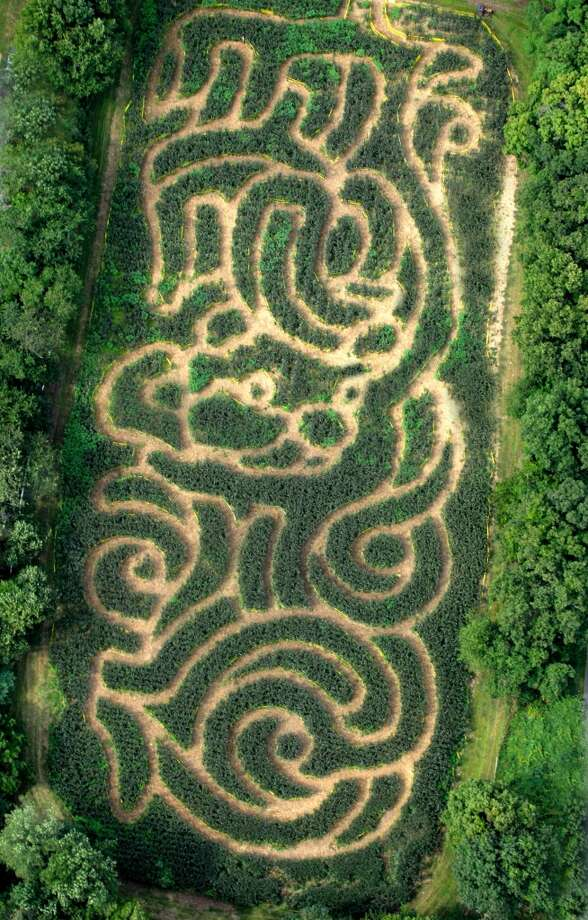 Plasko's Corn Maze, Trumbull -- A mile and a half of twists, turns and challenging dead ends, along with a country store, bakery and hayrides. Fridays, 3-5 p.m.; Saturday and Sunday, 9 a.m.-6 p.m. Through the fall. $7, $6 for children 13 and younger, free for children younger than three. 670 Daniels Farm Road. 203-268-2716, plaskosfarm.com. Photo: Contributed Photo