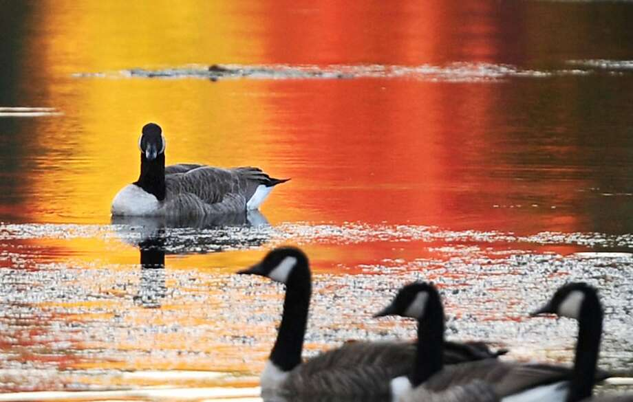 Nobody will notice ...With the reflection just right, Bill finds the perfect time to relieve himself on Hawley Pond in Newtown, Conn. Photo: Tyler Sizemore, Connecticut Post