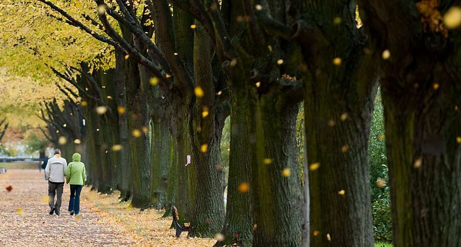 Colored leaves gently fall as couple stroll in a park in Hanover, Germany. Photo: Hauke-Christian Dittrich, AFP/Getty Images