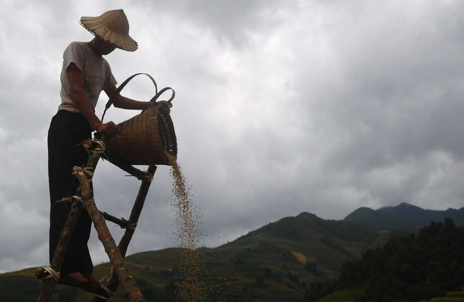 Vietnam: This picture taken on October 1, 2013 shows a Hmong ethnic hill tribe man pourring down paddy seeds from a height for the wind to extract empty seeds during rice harvesting on a terrace rice field in Mu Cang Chai district, in the northern mountainous province of Yen Bai. The local residents, mostly from the Hmong hill tribe, grow rice in the picturesque terrace fields whose age is estimated to hundreds years. Due to hard farming conditions, especially irrigation works, locals produce only one rice crop per year. In recent years a growing numbers of tourists have been attracted by the beautiful landscapes created by the region's rice terrace fields. Photo: Hoang Dinh Nam, AFP/Getty Images
