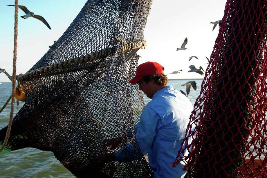 Zach Moser with Discovery Shrimp & Oyster Company cleans out his net after it got tangled with a fellow shrimper near the Houston Ship Channel, Friday, Sept. 27, 2013, in Kemah. Moser, along with friend Eric Leshinsky, bought a shrimp boat to shrimp the area for a better understanding of the Gulf Coast. The two plan to make art pieces from their observations. (Cody Duty / Houston Chronicle) Photo: Cody Duty, Staff / © 2013 Houston Chronicle