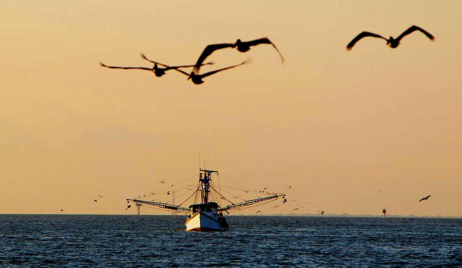 Seagulls follow a shrimp boat near Kemah. Shrimpers have worked in Galveston Bay for the past 100 years, but there are fears the industry will die. Photo: Cody Duty, Staff / © 2013 Houston Chronicle