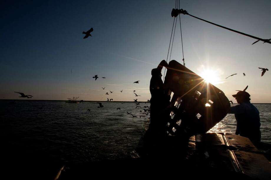 Eric Leshinsky, left, and Zach Moser, right, with Discovery Shrimp & Oyster Company untangle their net and doors after they got tangled with a fellow shrimper near the Houston Ship Channel, Friday, Sept. 27, 2013, in Kemah. The two artists bought a shrimp boat to shrimp the area for a better understanding of the Gulf Coast. The two plan to make art pieces from their observations. (Cody Duty / Houston Chronicle) Photo: Cody Duty, Staff / © 2013 Houston Chronicle