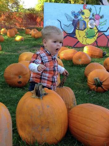 """Fifteen-month-old Nicholas Borden takes a first pumpkin-shopping trip at Sunnyside Gardens in Saratoga Springs. """"What a great day of fun!"""" says his mom (Amy Rodwell)"""