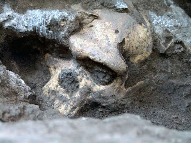 This 2005 photo provided by the journal Science shows a pre-human skull found in the ground at the medieval village Dmanisi, Georgia. The discovery of the estimated 1.8-million-year-old skull of a human ancestor captures early human evolution on the move in a vivid snapshot and indicates our family tree may have fewer branches than originally thought, scientists say. It is the most complete ancient hominid skull found to date, as well as the earliest evidence of human ancestors moving out of Africa and spreading north to the rest of the world. Photo: Uncredited, AP / AP2009