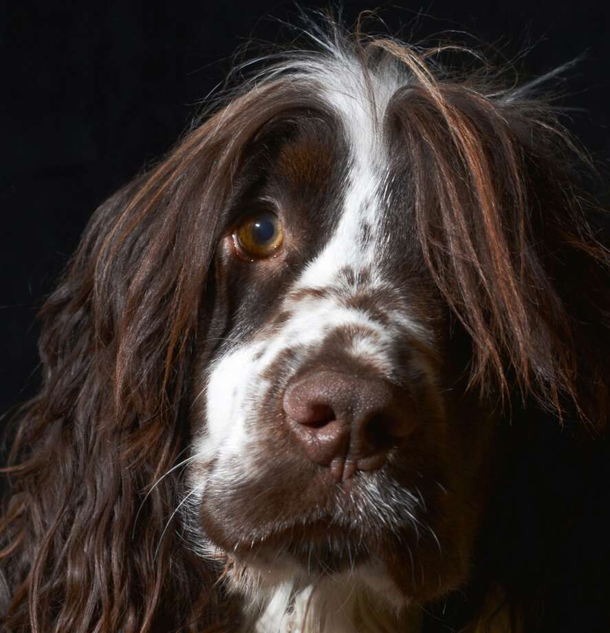 Portrait Photo of the Year Winner - by Phillip Watts Photo: The Kennel Club