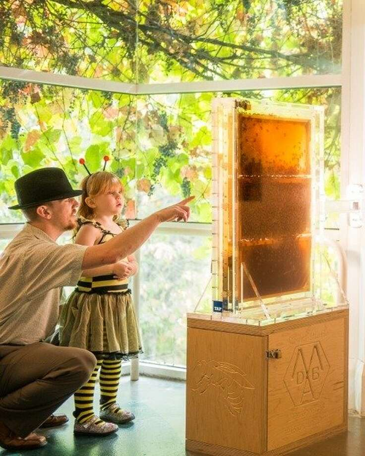 J.B. Yount and Anneliese Yount check out Hive Alive at the Lindsay Wildlife Museum in Walnut Creek. Photo: Paul Hara