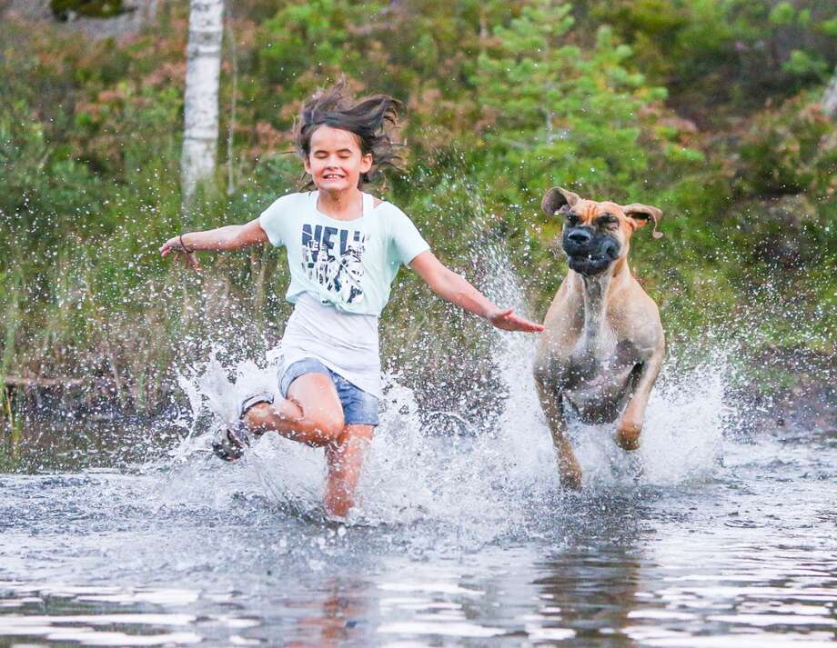 OVERALL WINNER: 'Man's Best Friend' Photo Winner - by Roger Sjolstad Photo: The Kennel Club