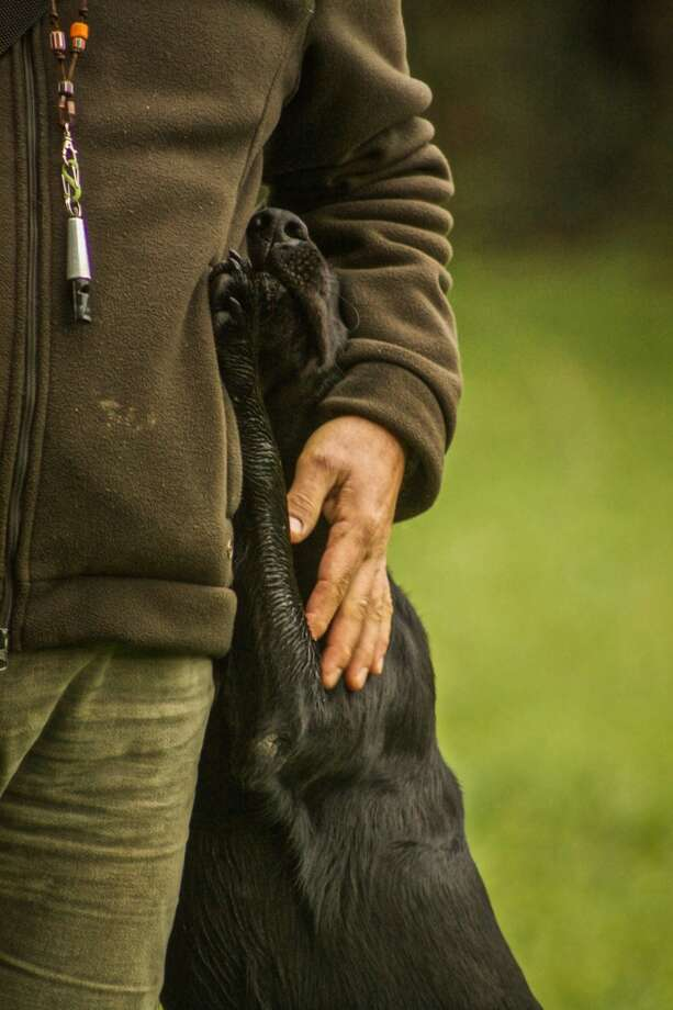 'Man's Best Friend' Photo Runner-up - by Claudia Tolini Photo: The Kennel Club
