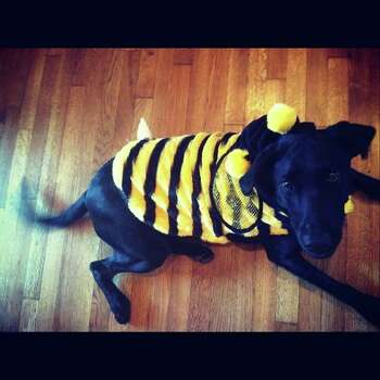 Jordan in her bumble bee costume.