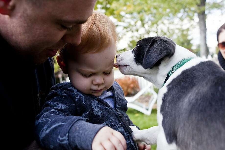 Cat person:One-year-old Katelyn Forysteck shies away from a puppy licking her face during the PAWS Animal Rescue fundraiser in Swartz Creek, Mich. Photo: Zack Wittman, Associated Press