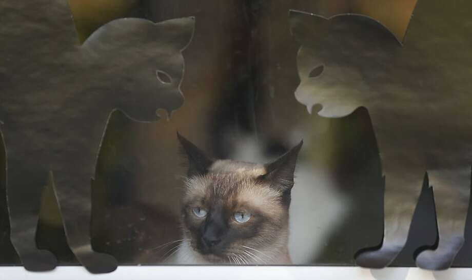 Very realistic:Some folks in Lawrence, Kan., like to decorate their windows with cat cutouts for Halloween. Photo: Orlin Wagner, Associated Press