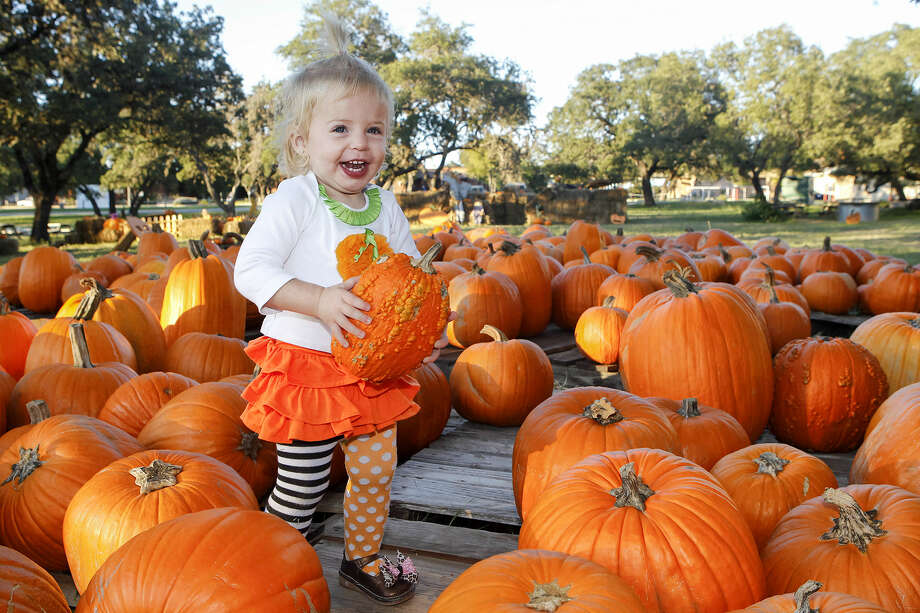 Eighteen-month-old Harper Young smiles as she holds a pumpkin at the St. Thomas Episcopal School Pumpkin Patch, 1416 N.E. Loop 1604.Open 11 a.m.-7 p.m., Tuesday through Friday, and 10 a.m.-6 p.m., Saturday and Sunday.  The patch is open through Oct. 31.