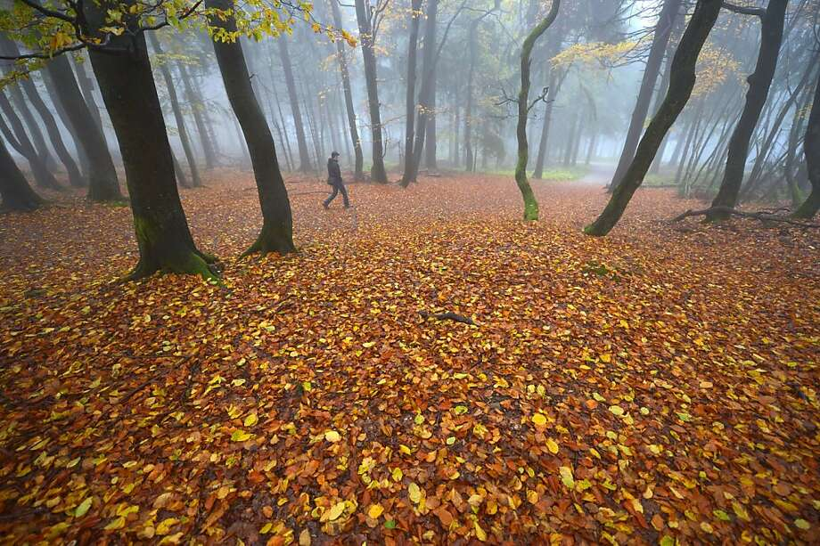 Spooky woods:A man walks over a carpet of wet leaves on foggy Feldberg Mountain in the Taunus region of western Germany. Photo: Arne Dedert, AFP/Getty Images