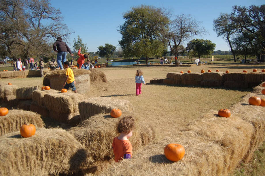 Love Creek Orchards Great Hill Country Pumpkin Patch and Harvest Celebration allows visitors to pick their own apples and pumpkins.The patch is open daily from 10 a.m.-4 p.m. at 14024 Texas 16 North in Medina.Cost is $6.Contact 830-529-2202, or hutzler@lovecreekorchards.com.Visit the site. Photo: KATE HUNGER, COURTESY PHOTO