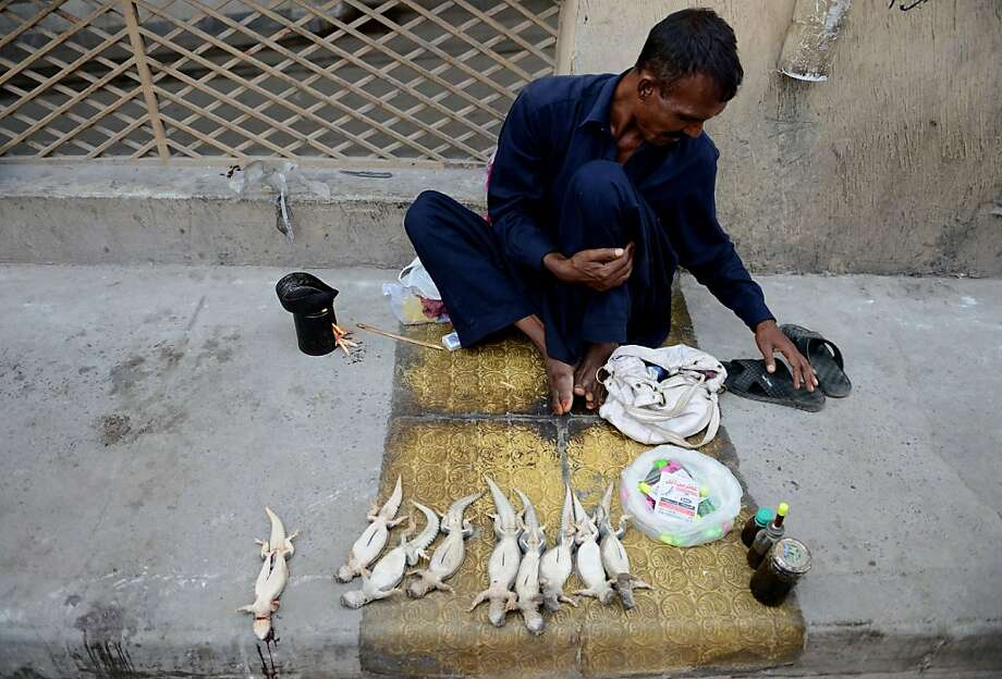 Good for your joints:A Pakistani vendor selling spiny-tailed lizards known as dhabs waits for customers 