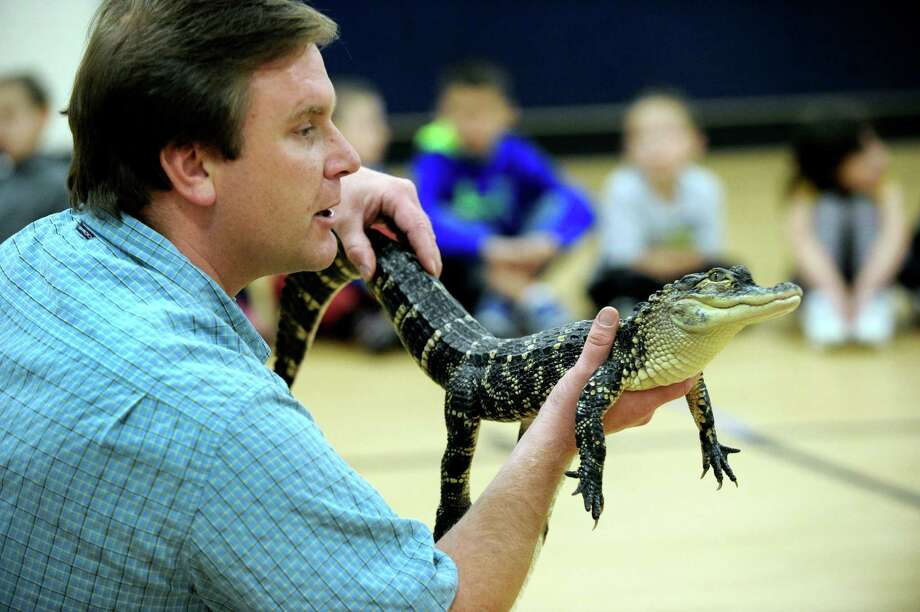 Chris Evers, 41, of Animal Embassy, holds an allegator from the Florida swamps, expected to grow between 13 and 16 feet long. Evers made his presentation to children at Huckleberry Hill Elementary School in Brookfield, Conn. Wednesday, Oct. 23, 2013. Photo: Carol Kaliff / The News-Times