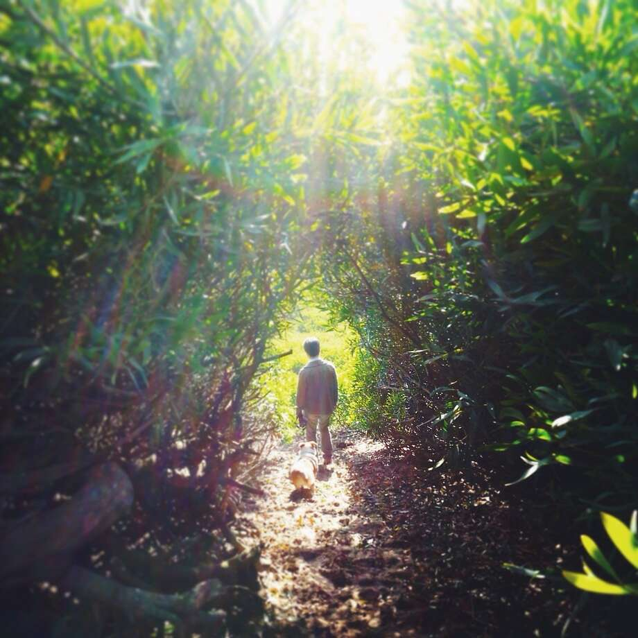 "From photographer Rhea Yo, ""I took this photo of Sam and Meg (my husband and Corgi) while hiking in our favorite park in San Francisco, Fort Funston. We found a trail carved out through some tall bushes; I snapped this photo as they were exiting and I was entering. With the sunbeams shining through, it looked like they were entering a magical rabbit-hole into another world."" Follow Rhea on Instagram - @rheayo. Photo: Rhea Yo, @rheayo"