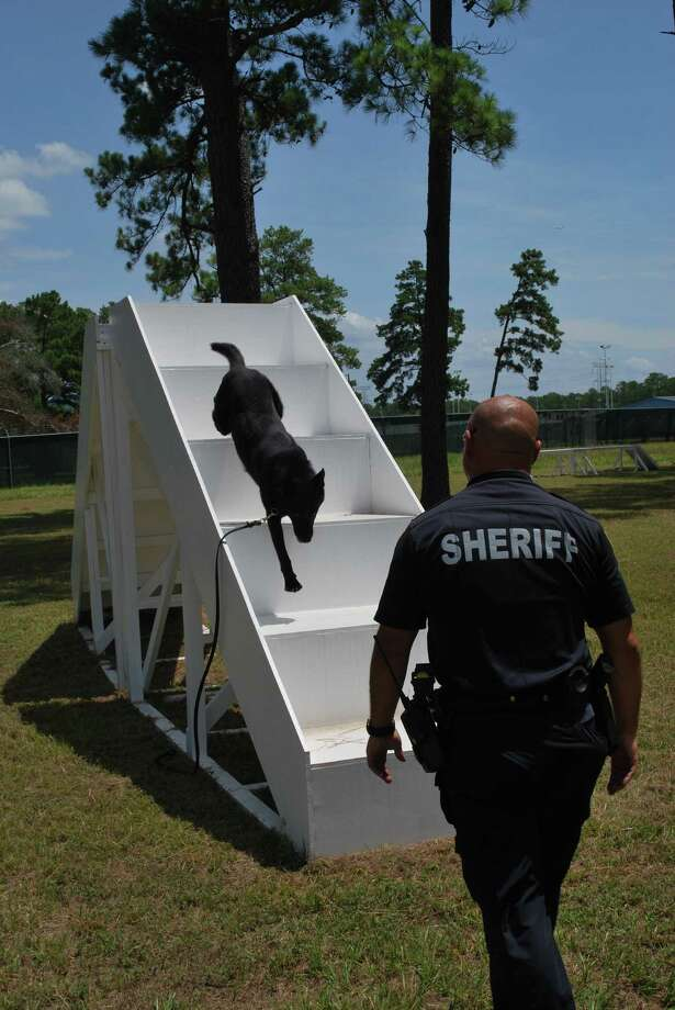 A police dog trains on an obstacle course. Photo: Provided By Harris County Sheriff's Office
