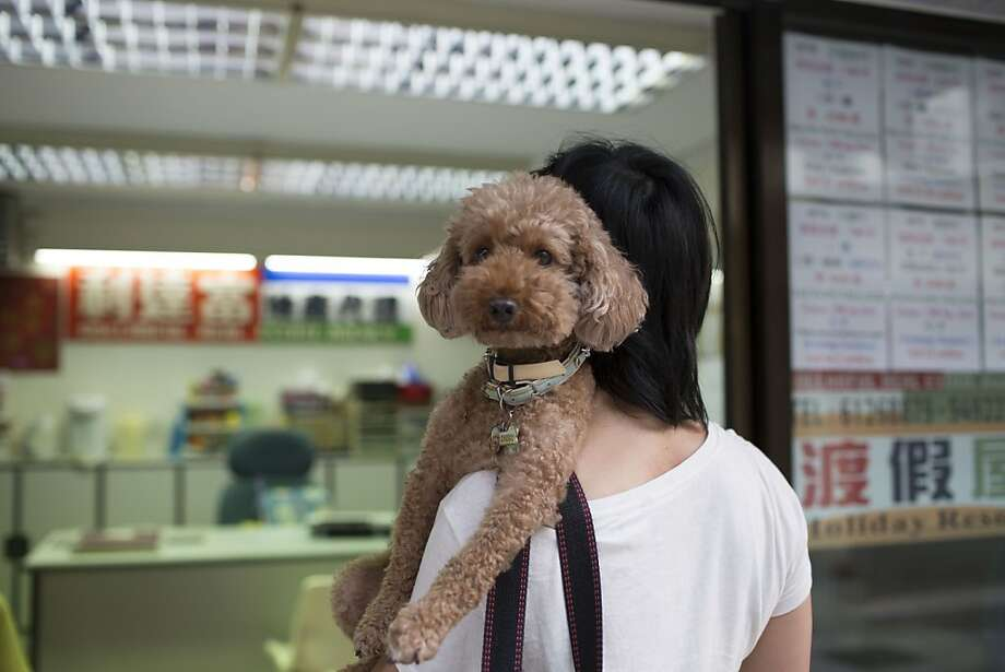 My service-human carries me everywhere:A poodle-toting woman enters a holiday rental property office on Lamma   Island in Hong Kong. Hong Kong has the world's highest home prices, most expensive retail rents and the   second-highest office occupancy costs. Photo: Brent Lewin, Bloomberg