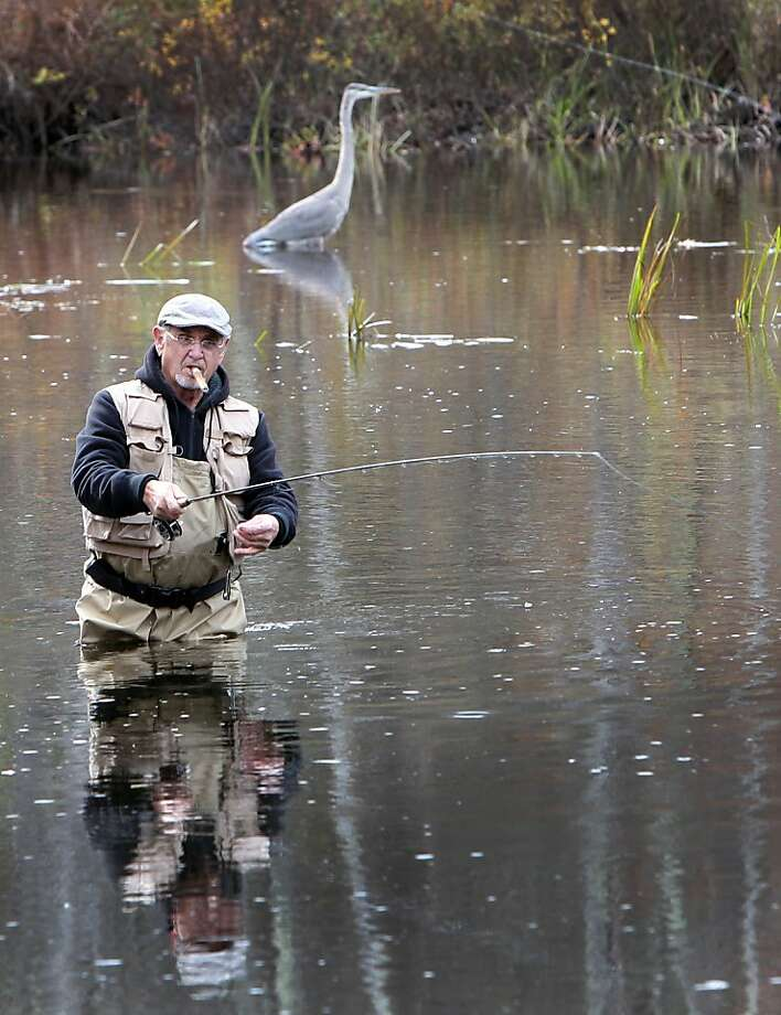 Fellow anglers:Ray Clement and a Great Blue Heron see who can catch the most salmon in the 