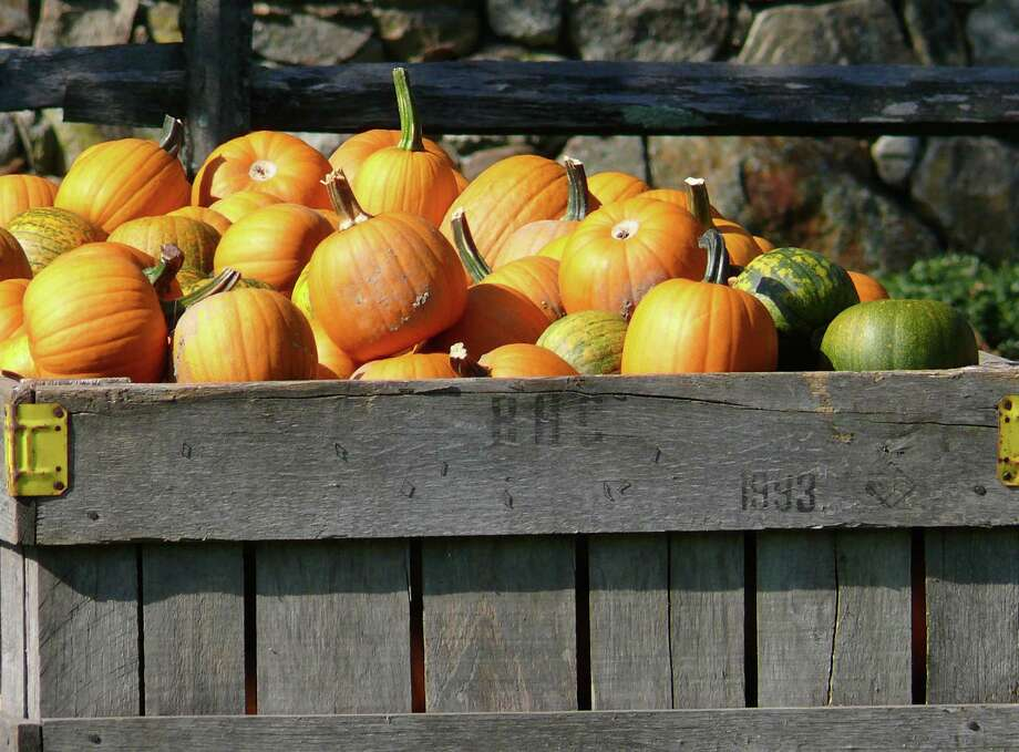 I'ts B.Y.O.P. this weekend when Earthplace hosts a pumpkin carving session on Saturday. Photo: File Photo / Westport News