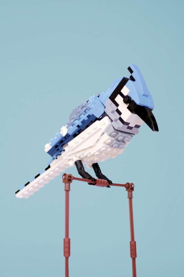 Bradley the Blue Jay (2012) © Thomas Poulsom