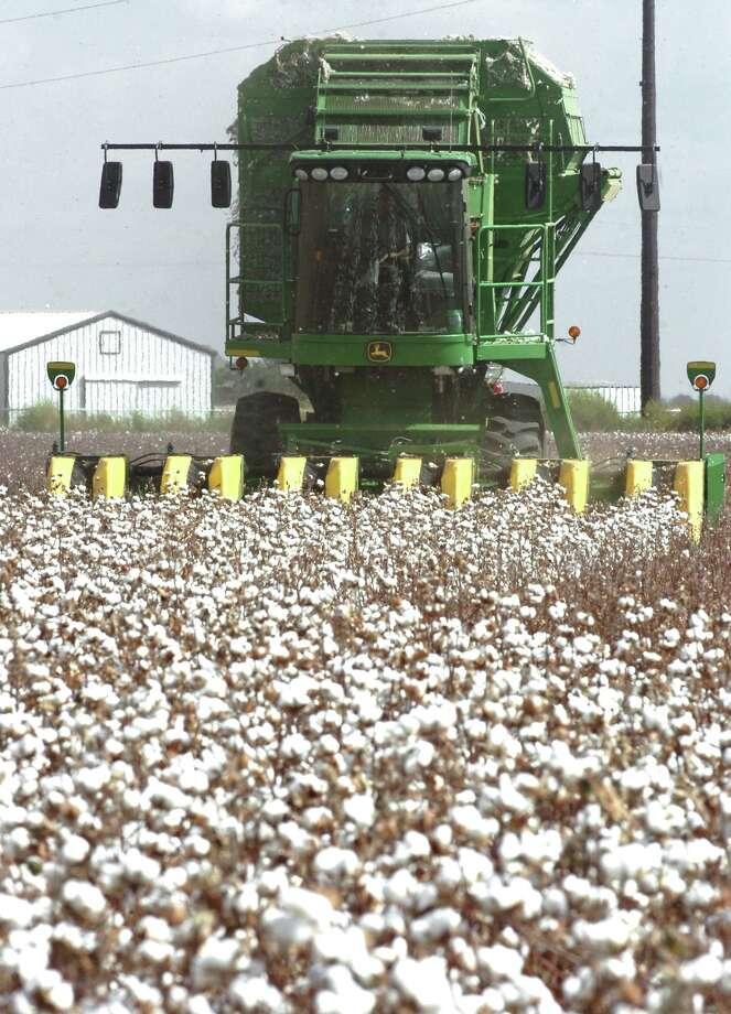 Cotton,House Concurrent Resolution No. 228, 75th Legislature, Regular Session (1997) Photo: Jim Watkins, File Photo / Lubbock Avalanche-Journal