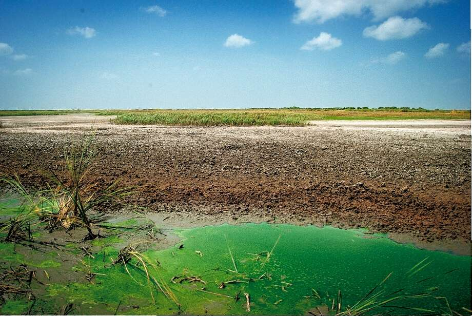 Olney Pond in the Brazoria National Wildlife Refuge. (Photo by W. Peter Romfh) Photo: 2013, W. Peter Romfh, Houston, TX / 2013, W. Peter Romfh, Houston, TX