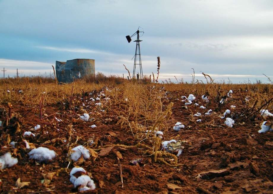 A dry cotton field near Ropesville, Texas. (Photo by Timothy Benson)