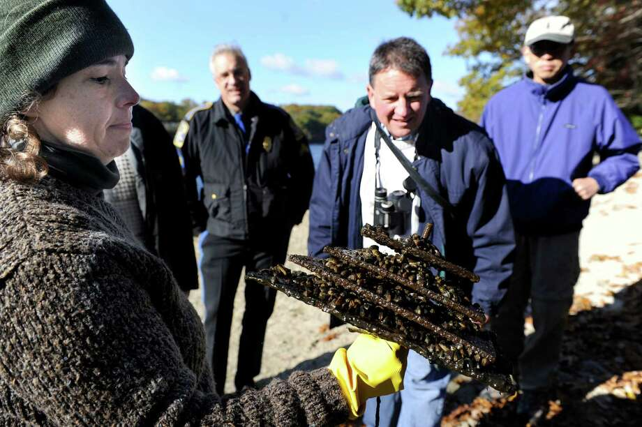 "Rebekah White, left a student at Western Connecticut State University, holds up a ""hotel"" of zebra mussels found in Lake Zoar, Friday, Oct. 25, 2013. Larry Marsicano, executive director of the Candlewood Lake Authority is center. Photo: Carol Kaliff / The News-Times"