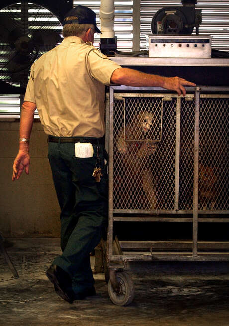 David Lee Nichols of the Animal Care and Control Deparatment pushes a cage of dogs into the gas chamber to be euthanized, Saturday, June 12, 2004. photo Bob Owen Photo: BOB OWEN, SAN ANTONIO EXPRESS-NEWS / SAN ANTONIO EXPRESS-NEWS