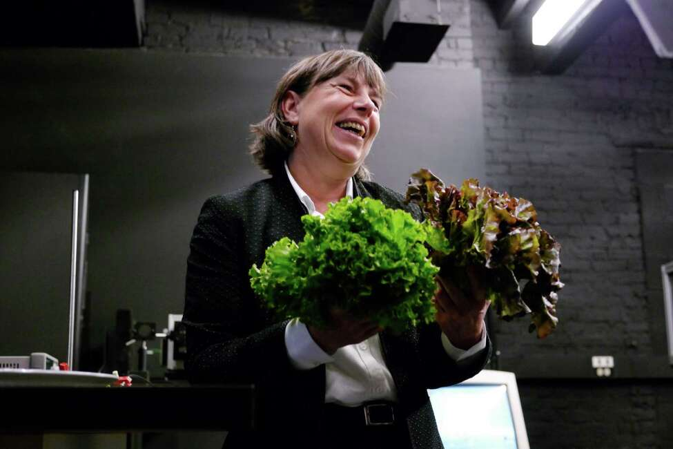 Tessa Pocock, a senior research scientist at the Lighting Research Center (LRC) at RPI, holds some leaf lettuce as she talks about her research focusing on plant photosynthesis on Wednesday, Oct. 23, 2013 in Troy, NY. Before coming to RPI, Pocock was director of research at Heliospectra, in Sweden, where she designed light-emitting diode (LED) regimes to reduce energy consumption, produce healthier plants, and improve the quality of greenhouse crops. (Paul Buckowski / Times Union)