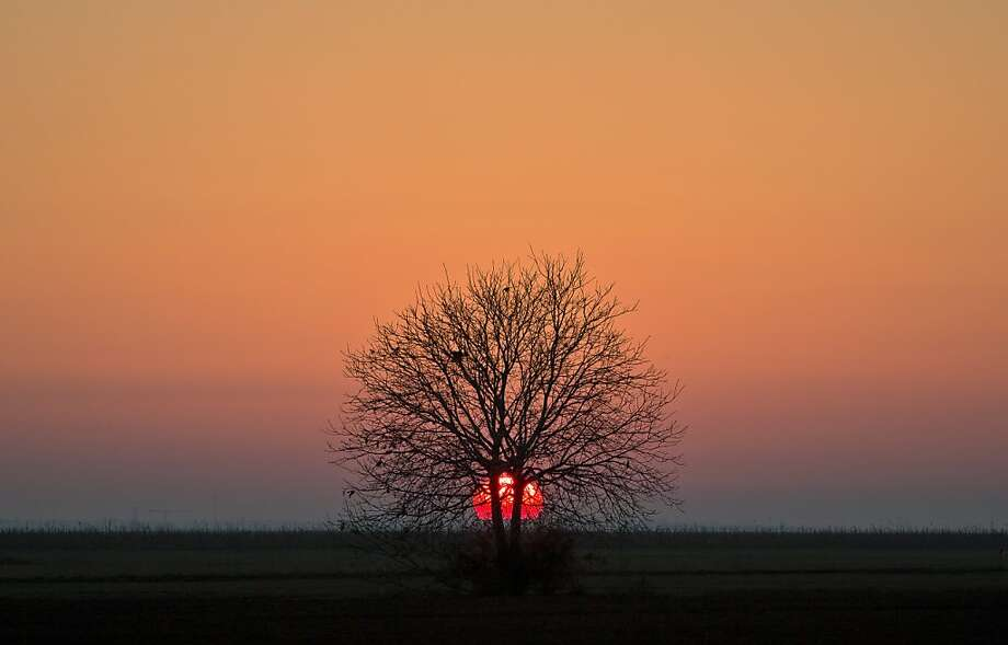 A tree is back dropped by the setting sun outside Bucharest, Romania, Sunday, Oct. 27, 2013. Romanian is enjoying a hotter than usual weather for the month of October with temperatures above 20 degrees centigrade (68 degrees Fahrenheit) . (AP Photo/Vadim Ghirda) Photo: Vadim Ghirda, Associated Press