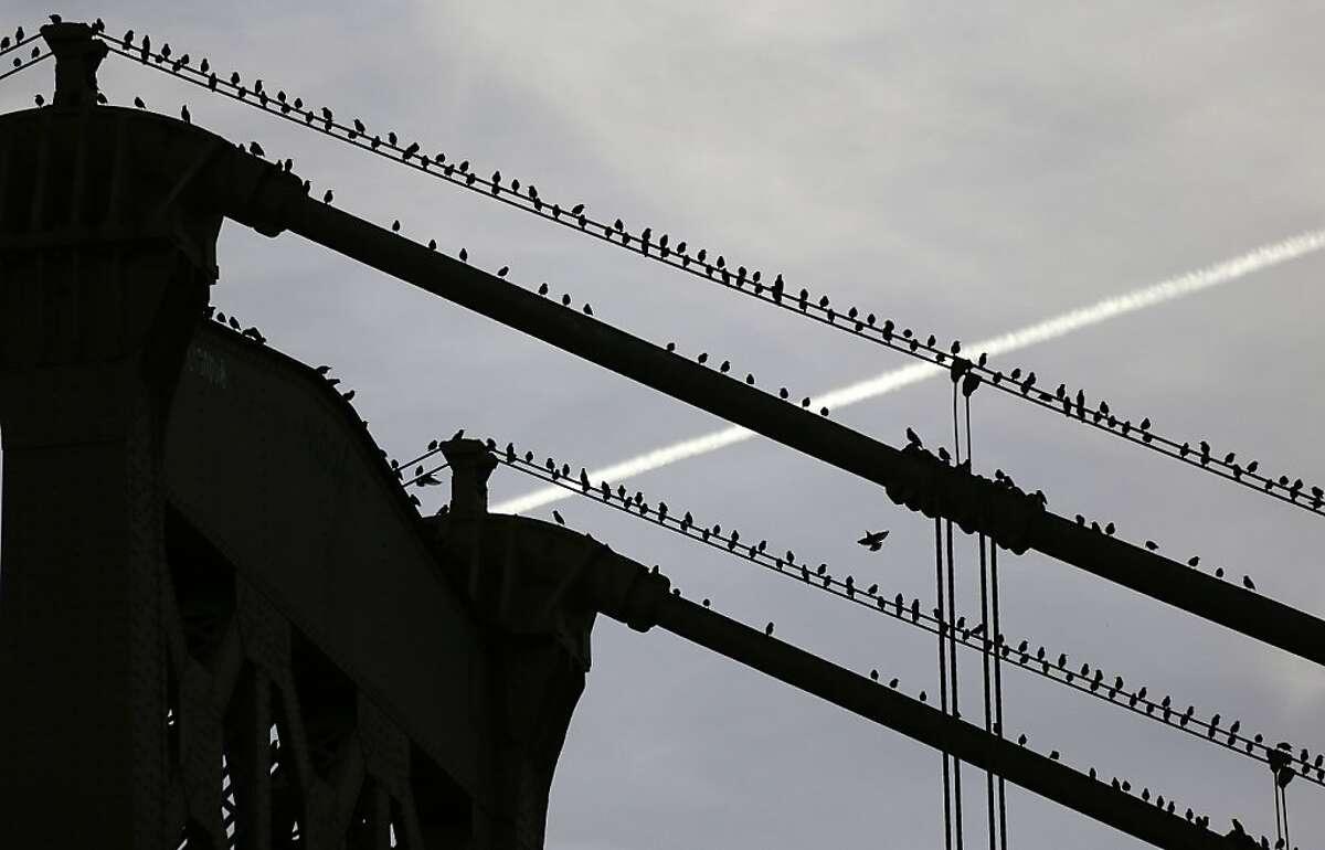 Birds sit on the 16th Street Bridge in Pittsburgh as the sunsets on Sunday, Oct. 27, 2013. (AP Photo/Gene J. Puskar)