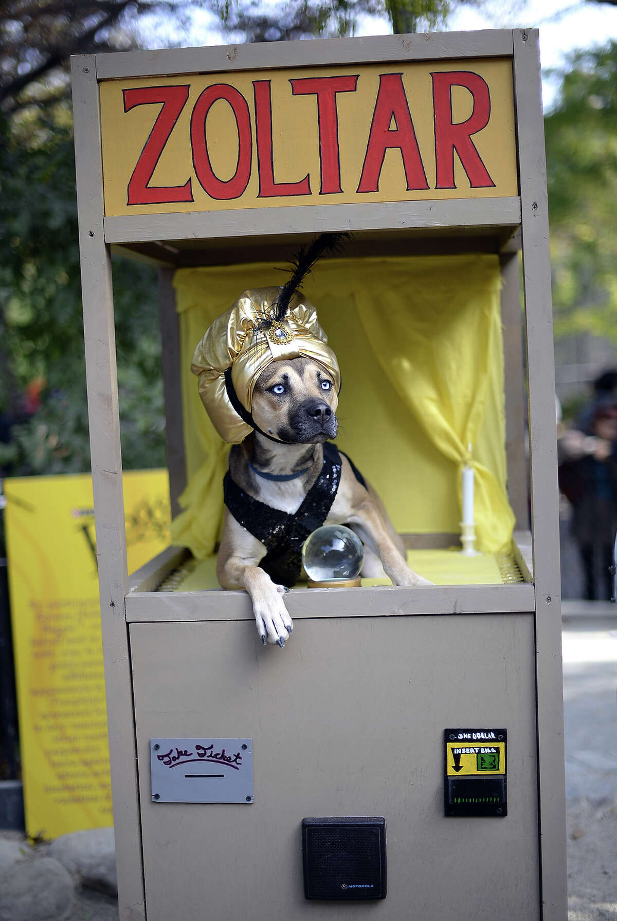 A dog dressed as a Zoltar fortune telling machine participates in the 23rd Annual Tompkins Square Halloween Dog Parade on October 26, 2013 in New York City. Thousands of spectators gather in Tompkins Square Park to watch hundreds of masquerading dogs in the country's largest Halloween Dog Parade.