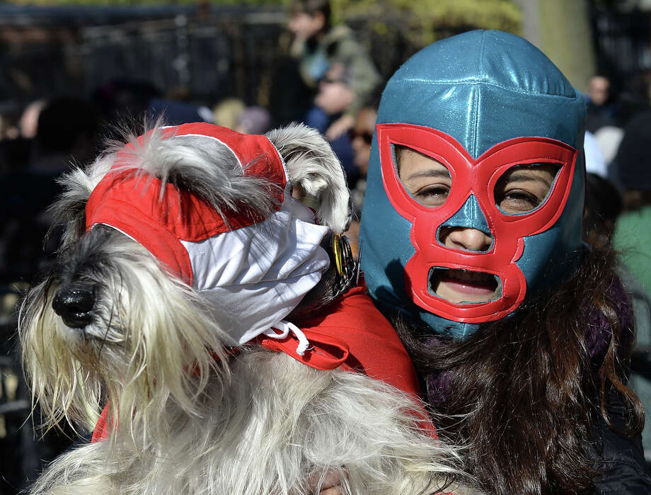 A woman and her dog dressed as wrestlers participate in the 23rd Annual Tompkins Square Halloween Dog Parade on October 26, 2013 in New York City. Thousands of spectators gather in Tompkins Square Park to watch hundreds of masquerading dogs in the country's largest Halloween Dog Parade. Photo: TIMOTHY CLARY, AFP/Getty Images / 2013 AFP