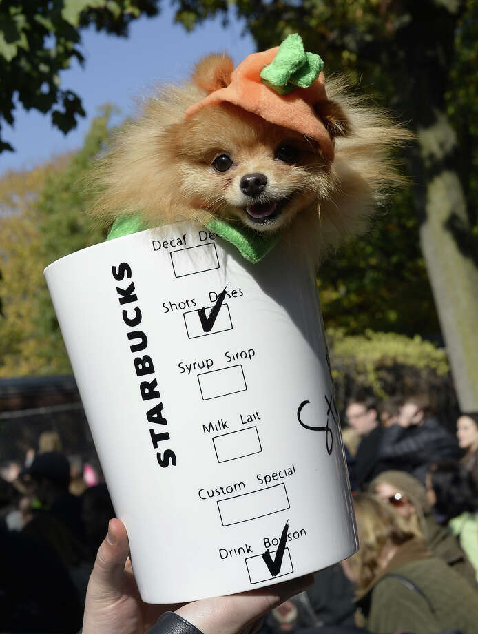A dog in costume participates in the 23rd Annual Tompkins Square Halloween Dog Parade on October 26, 2013 in New York City. Thousands of spectators gather in Tompkins Square Park to watch hundreds of masquerading dogs in the country's largest Halloween Dog Parade. Photo: TIMOTHY CLARY, AFP/Getty Images / 2013 AFP